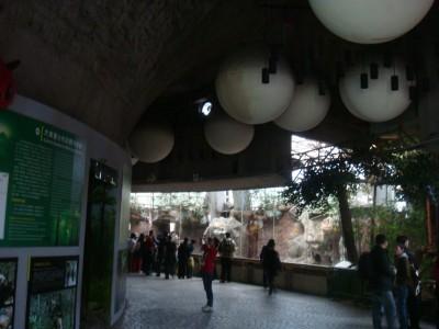 大熊猫館内部