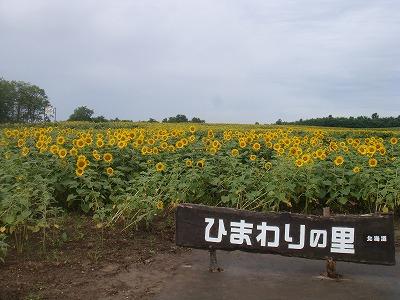 日本一のひまわり畑!
