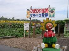 ひまわり迷路は300円!