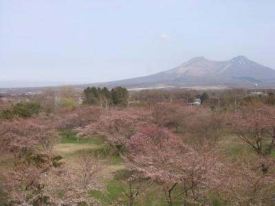 駒ヶ岳を望む