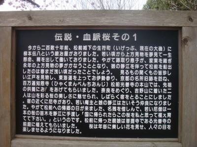 血脈桜伝説1