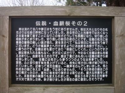 血脈桜伝説2