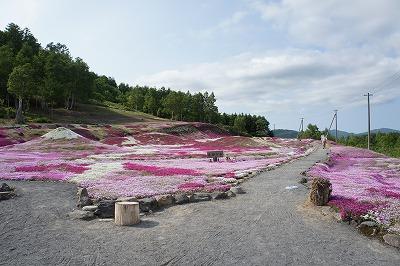 三島さん家の芝さくら