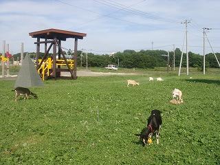 草を食うヤギ's