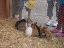 エサに群がるウサギ達