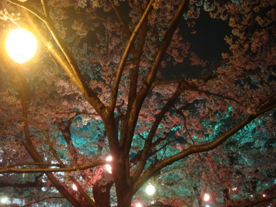 夜桜最高!