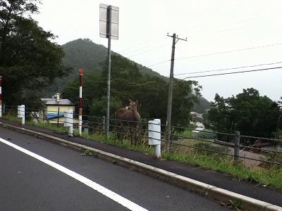 展望台へ向かう途中に鹿